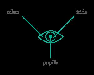 Iridologia Iridologo Trento Arco